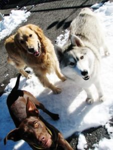 Board your beloved pet in Lake Tahoe at Truckee-Tahoe Pet Lodge; grooming available as well