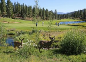 Grizzly Ranch: Scenic California golf getaway