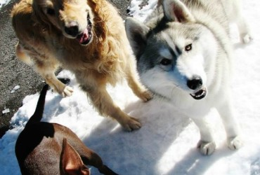 Truckee-Tahoe Pet Lodge offers secure place to board pets