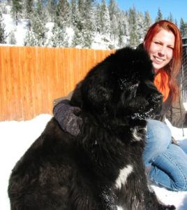 The Truckee-Tahoe Pet Lodge will also help simplify your... </div> <a href=