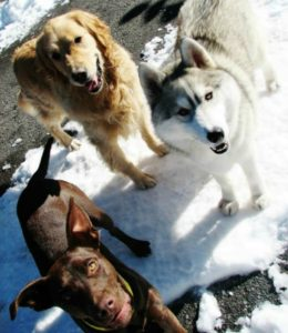 Truckee-Tahoe Pet Lodge: Award-winning place to board pets during Tahoe visits
