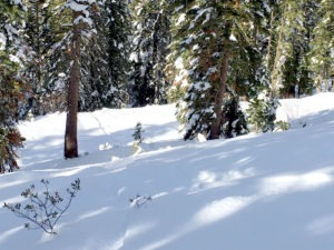 The lure of tree skiing at Northstar